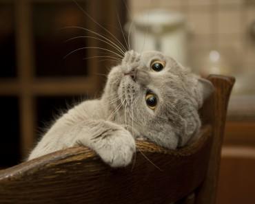 chat-dans-maison
