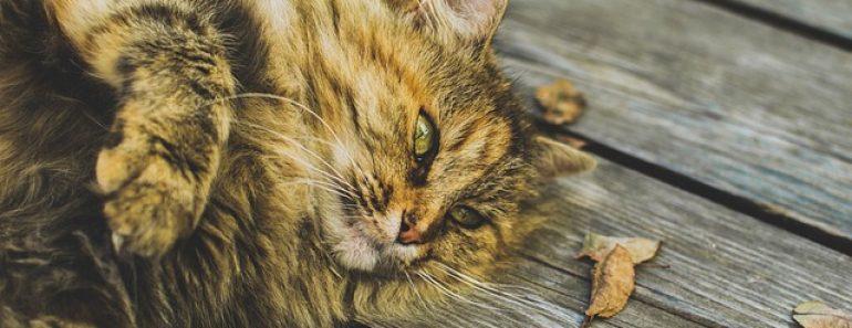 chat sur bois